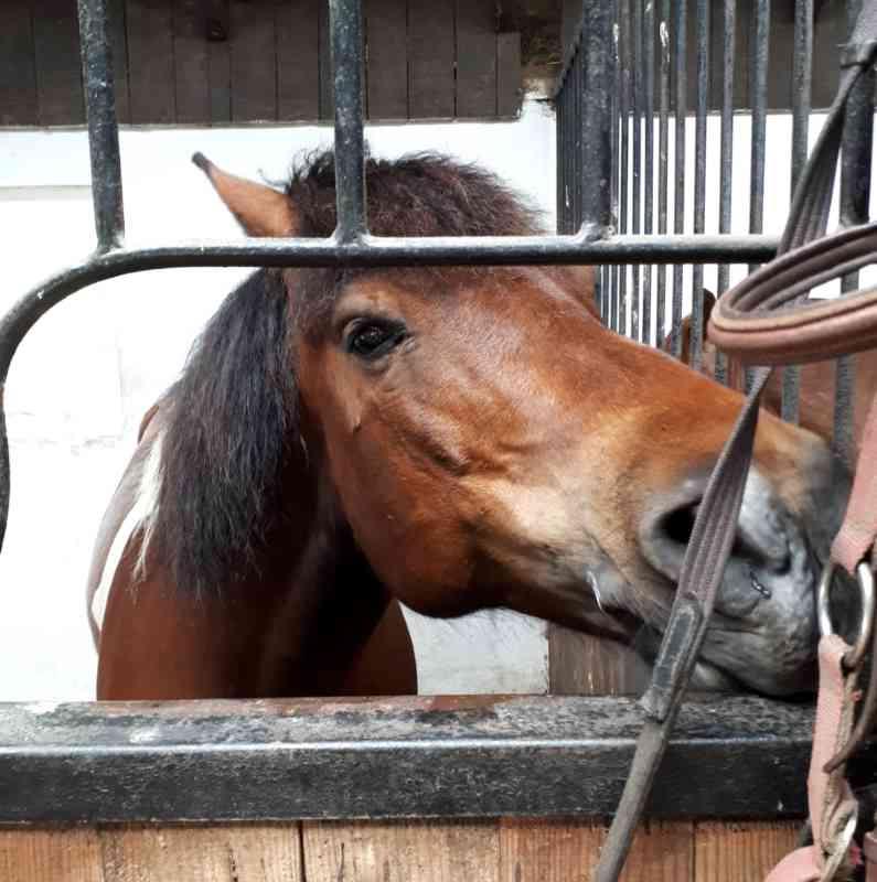 wycieczka przyrodnicza do stadniny koni