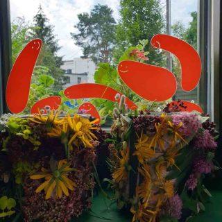 rośliny (26)
